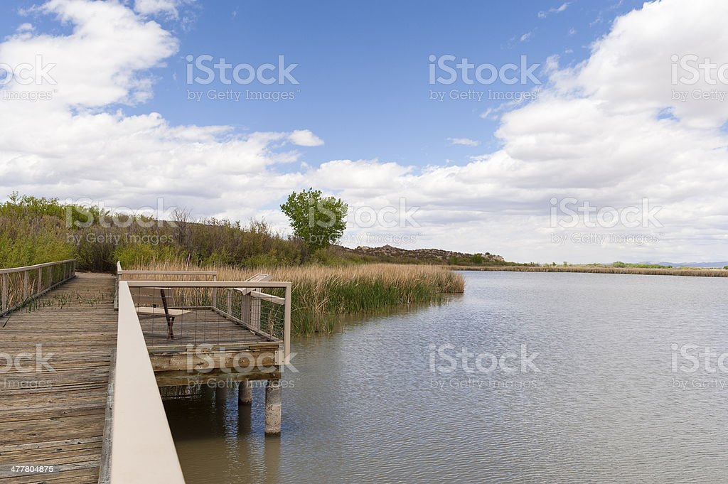 Bosque del Apache royalty-free stock photo