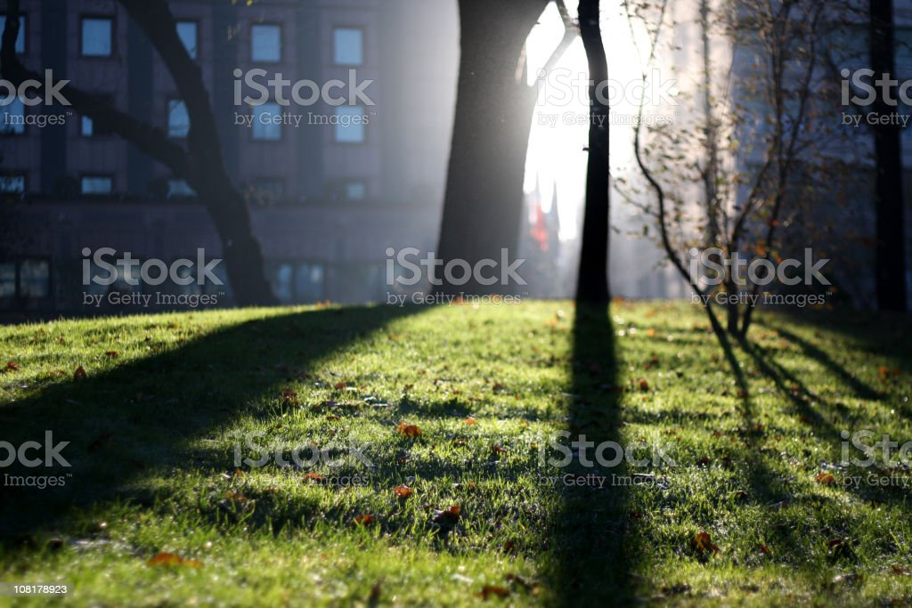 Apartment Building Along Park on Foggy Day royalty-free stock photo
