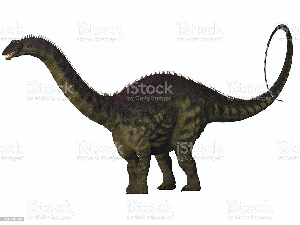 Apatosaurus on White stock photo