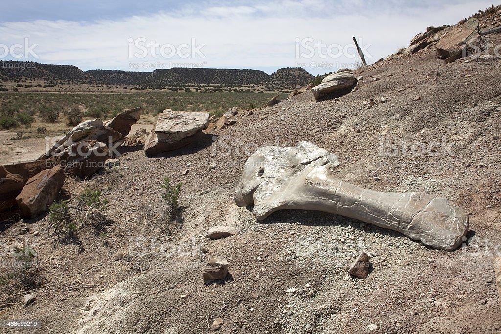 Apatosaurus shoulder blade Colorado stock photo