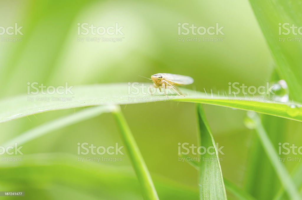 Aphid on the leaf royalty-free stock photo