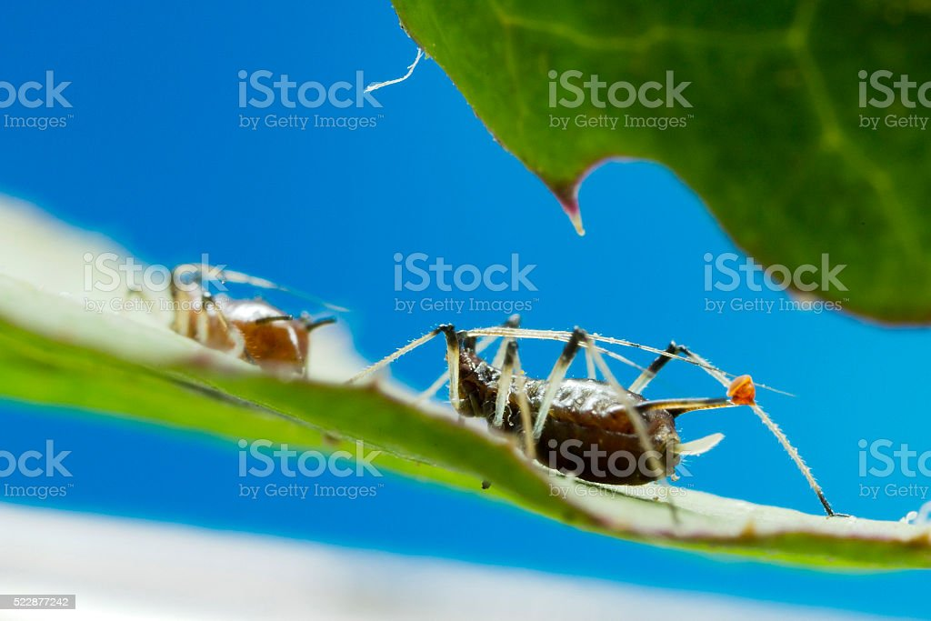 Aphids on leaf stock photo