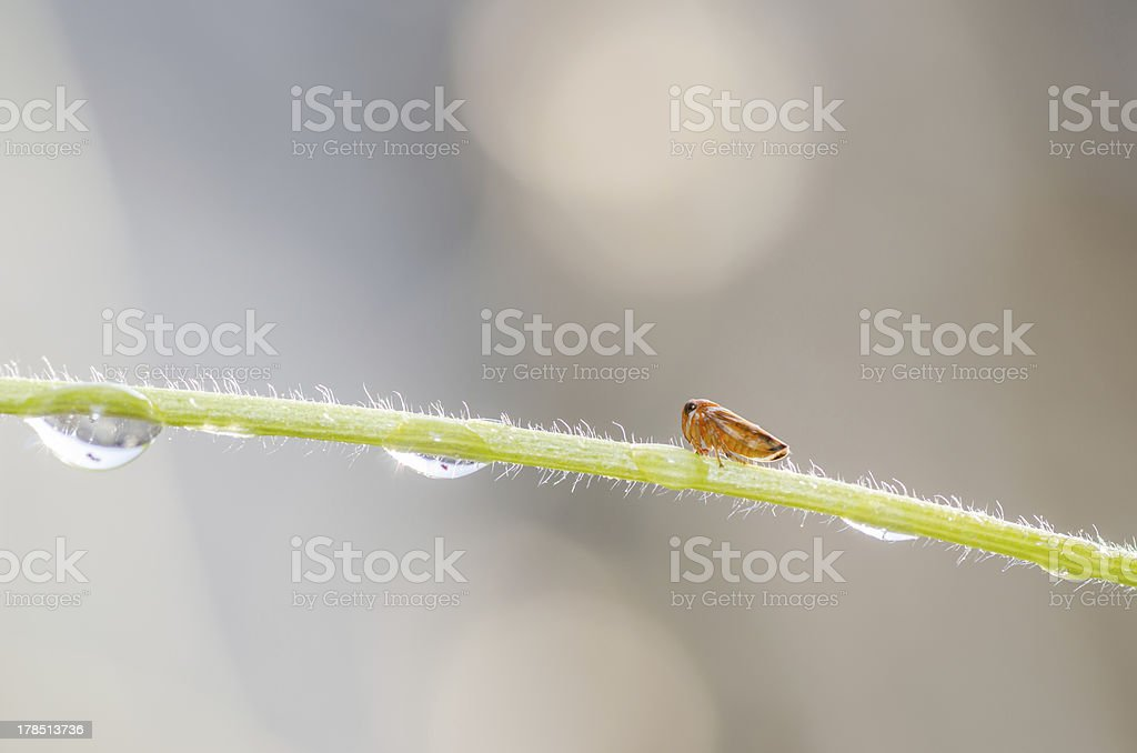 Aphids on the flower royalty-free stock photo