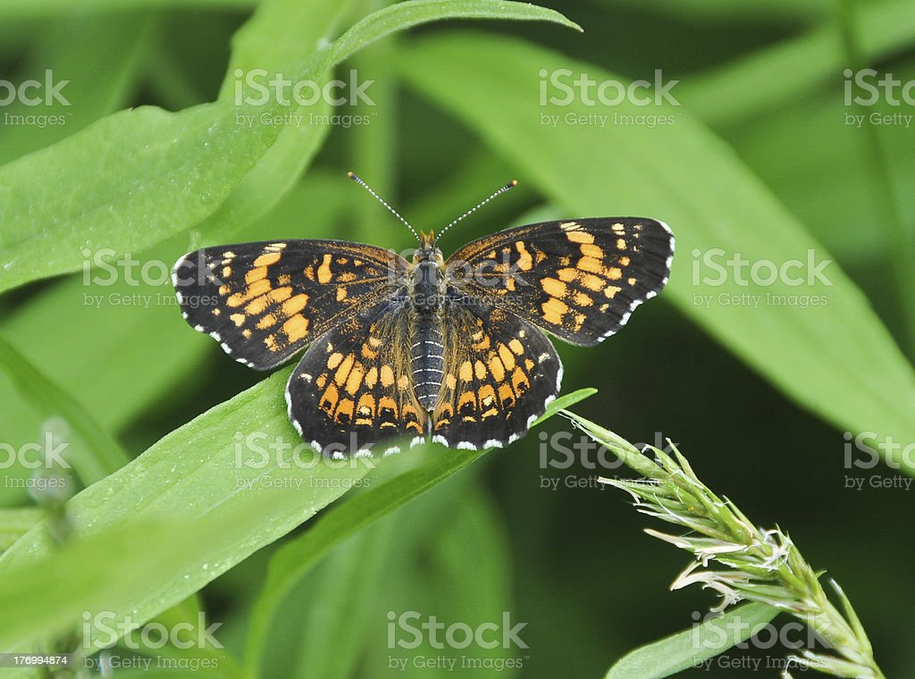 Aphrodite in the grass royalty-free stock photo