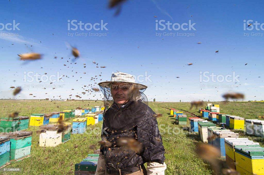 Apiarist portrait watching over his bee hives stock photo