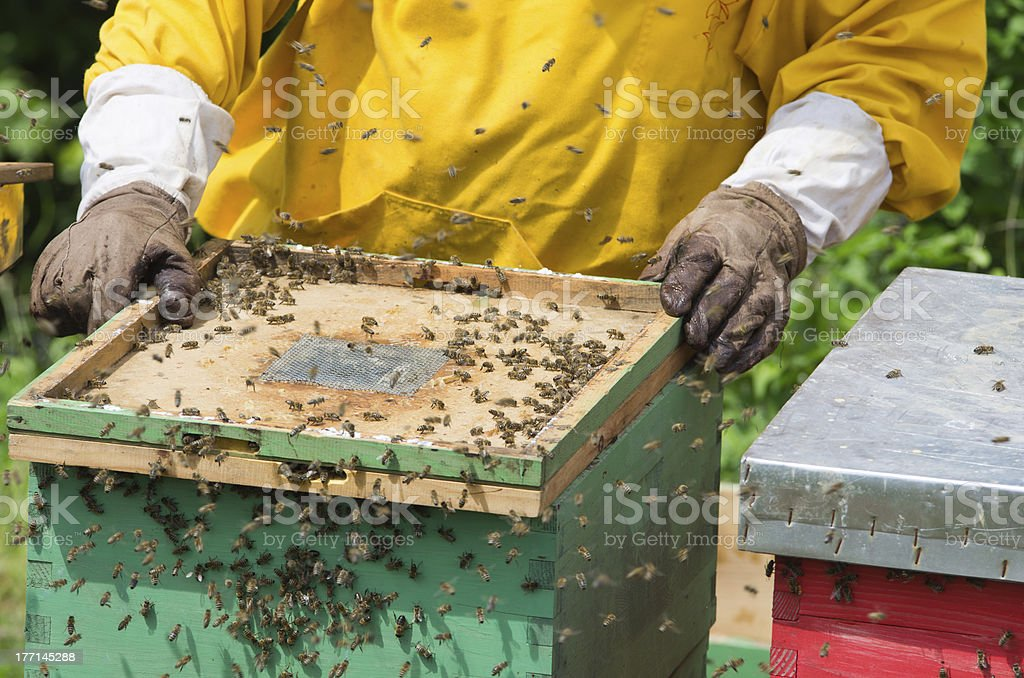 Apiarists working with beehives royalty-free stock photo