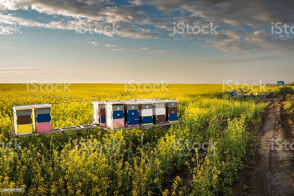 Apiary in the field stock photo