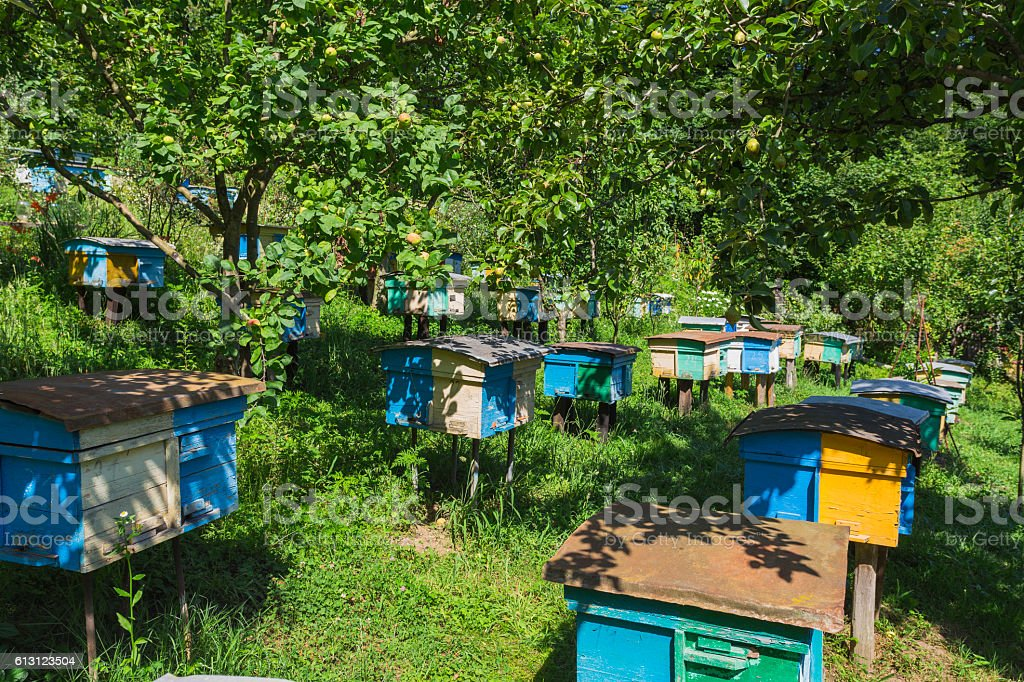 Apiary  in the foothills of the Caucasus stock photo