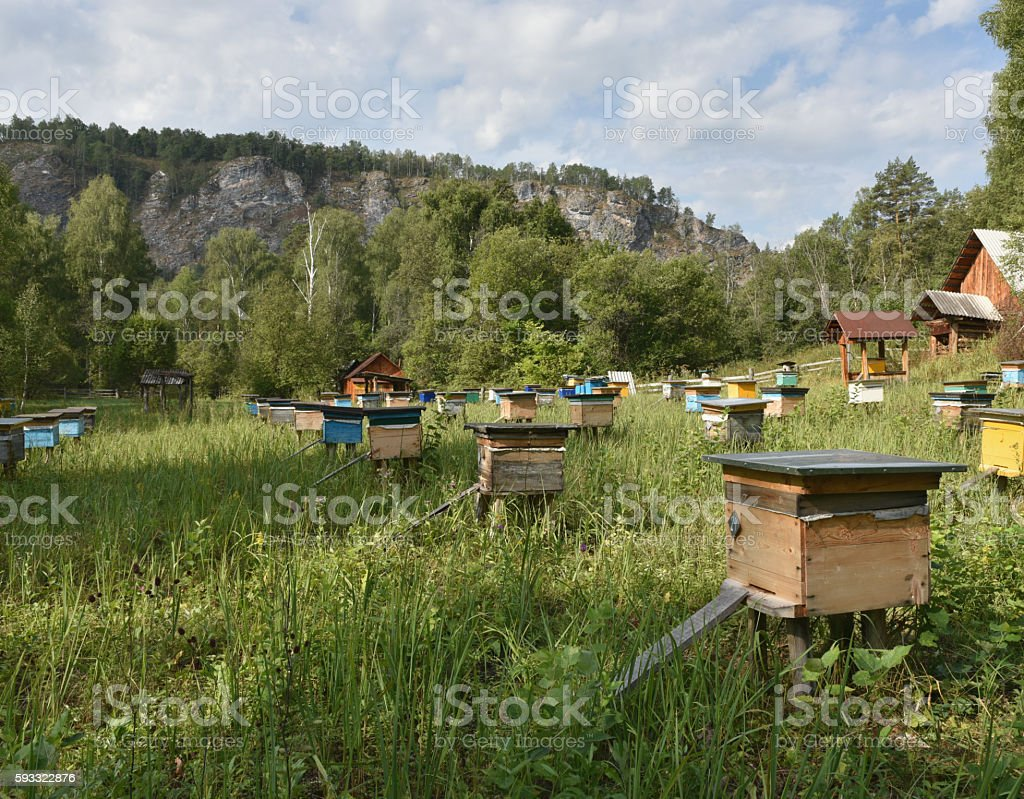 apiary stock photo