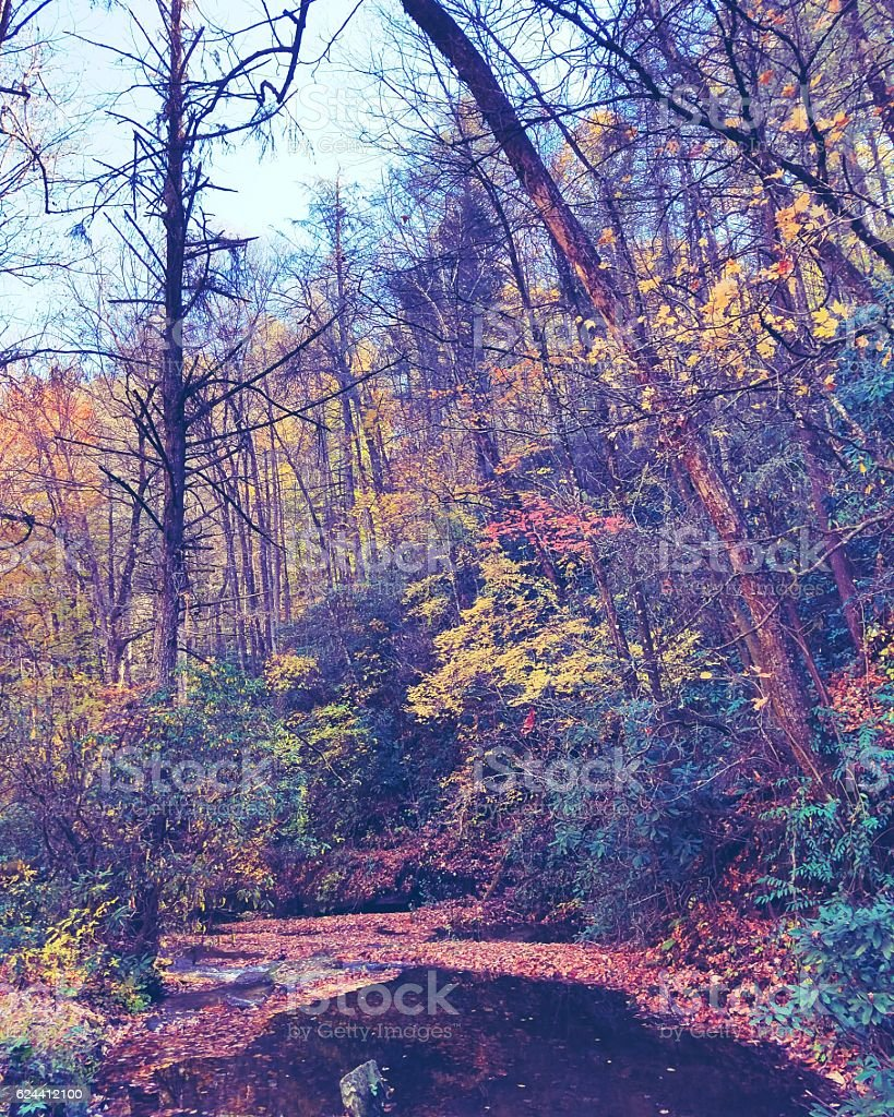 Appalachian Fall royalty-free stock photo