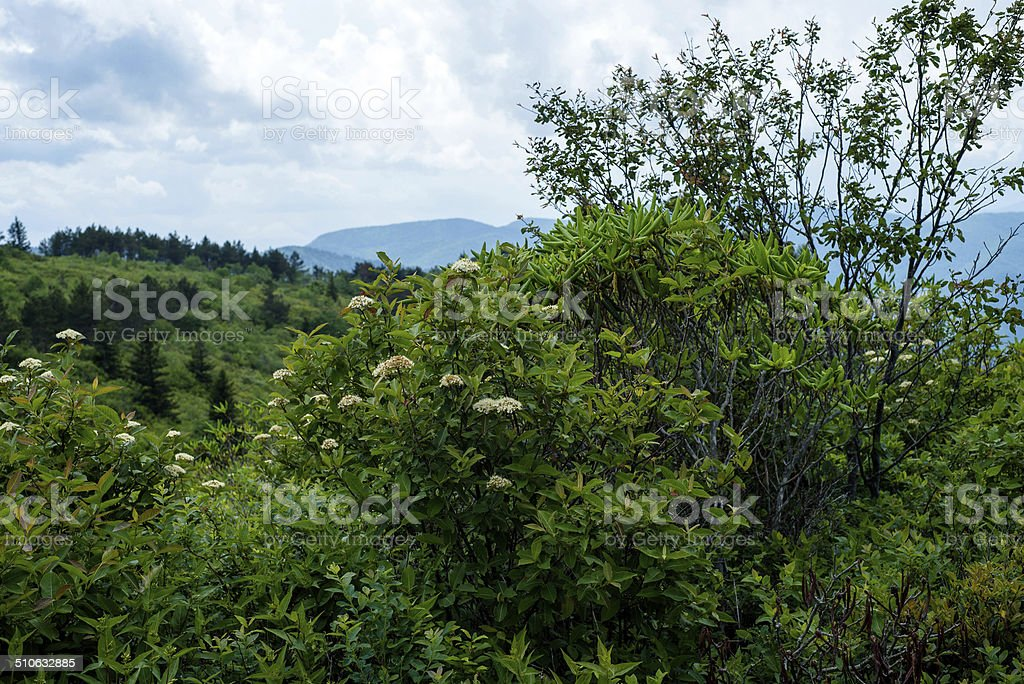 Appalachian Mountain vegetation stock photo