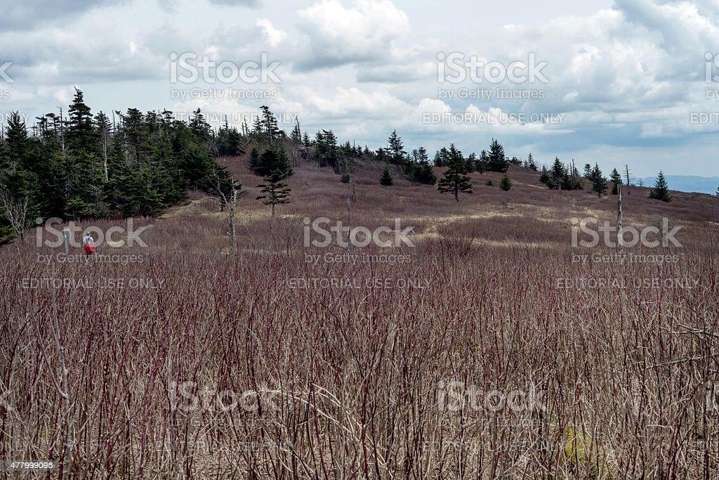 Appalachian trail as it crosses Mt. Rogers Recreation Area stock photo
