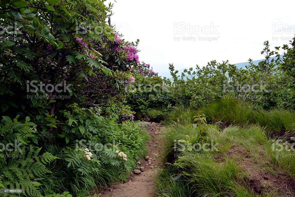 Appalachian Trail section royalty-free stock photo