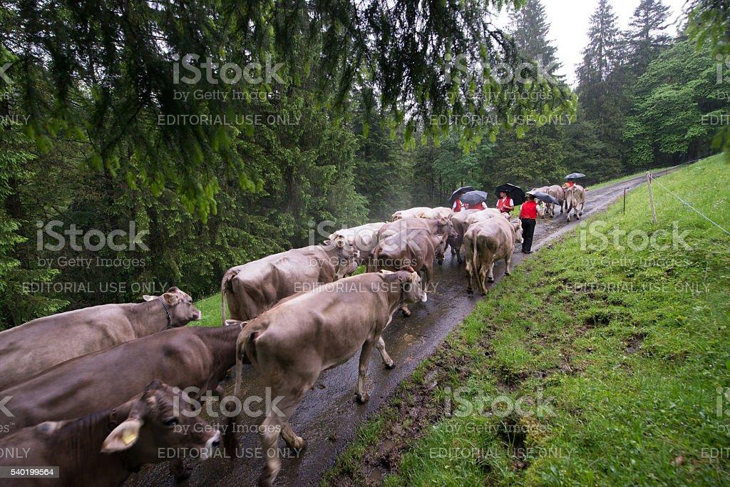 Appenzellerland stock photo
