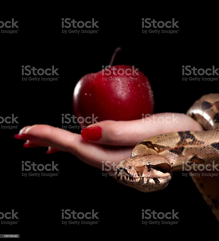 Apple and snake royalty-free stock photo