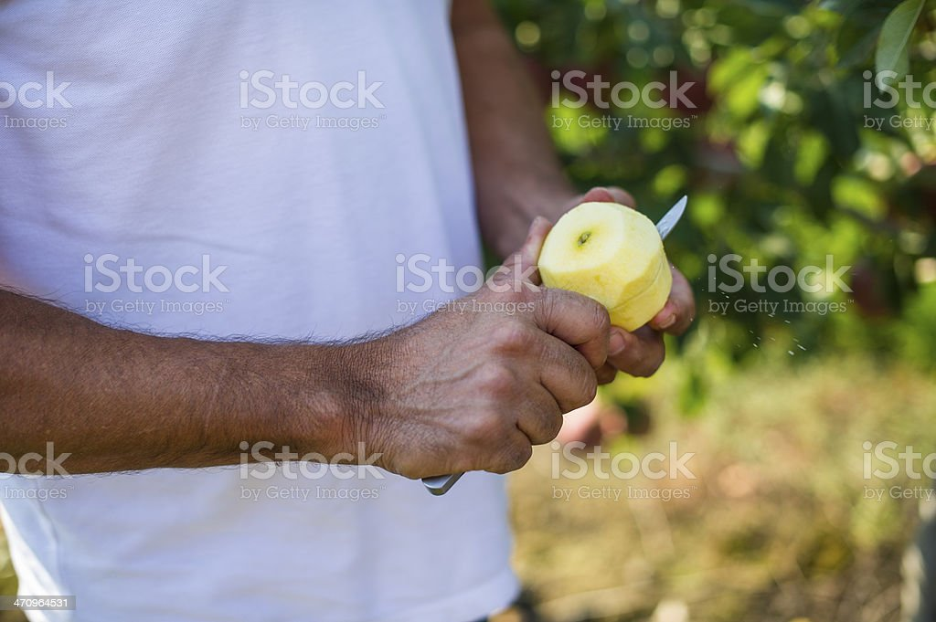 Apple being inspected and cut royalty-free stock photo
