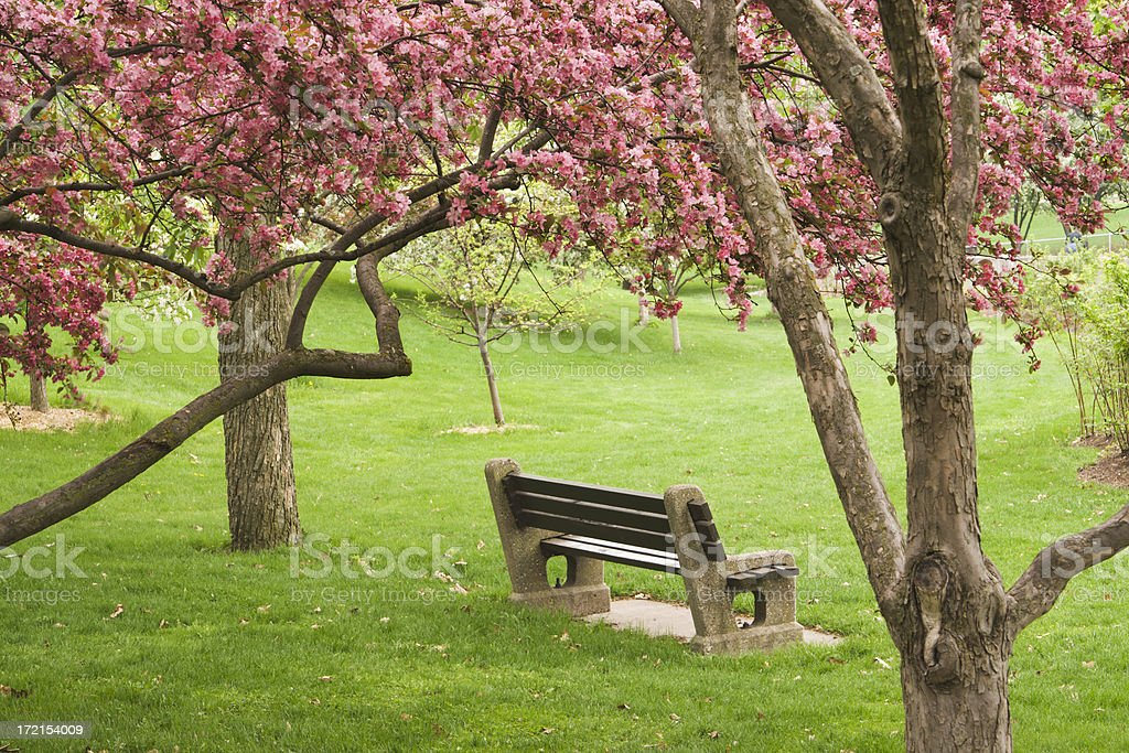 Apple Blossom Spring and Empty Bench royalty-free stock photo