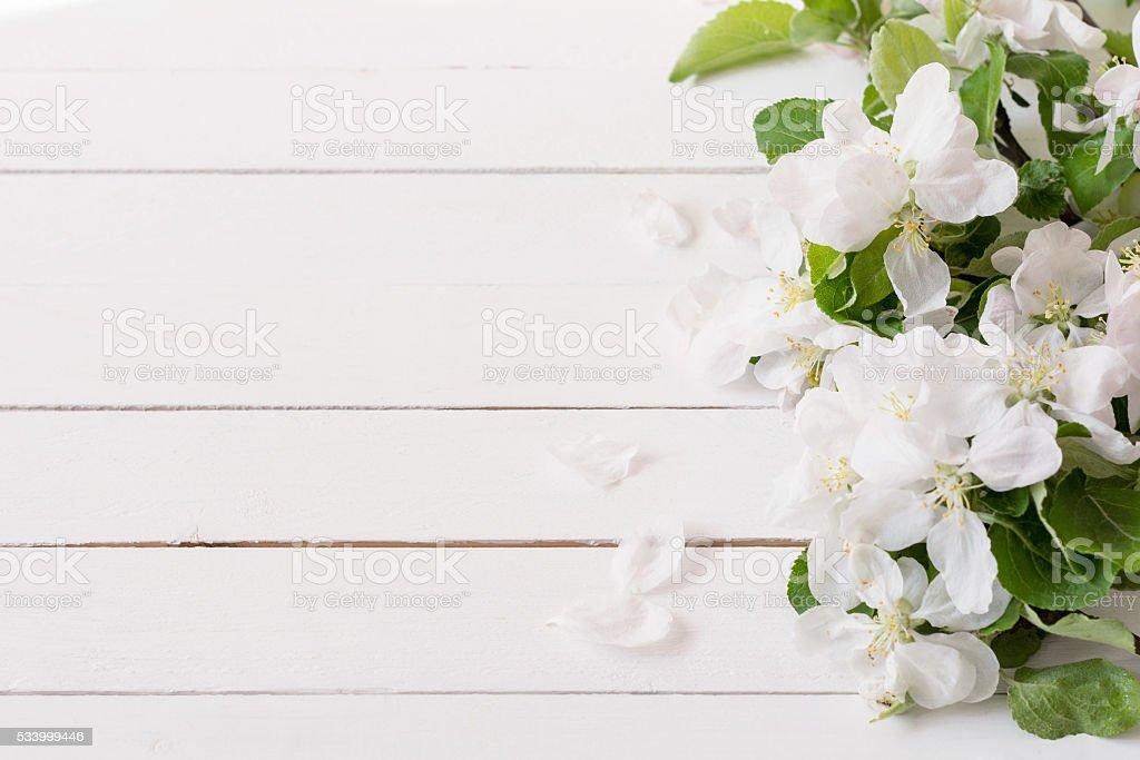 Маленькие Белые Цветы Изображения Pixabay Скачать
