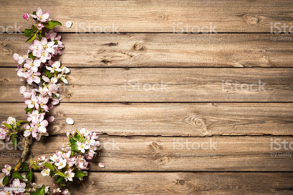 Apple blossoms on wooden surface stock photo