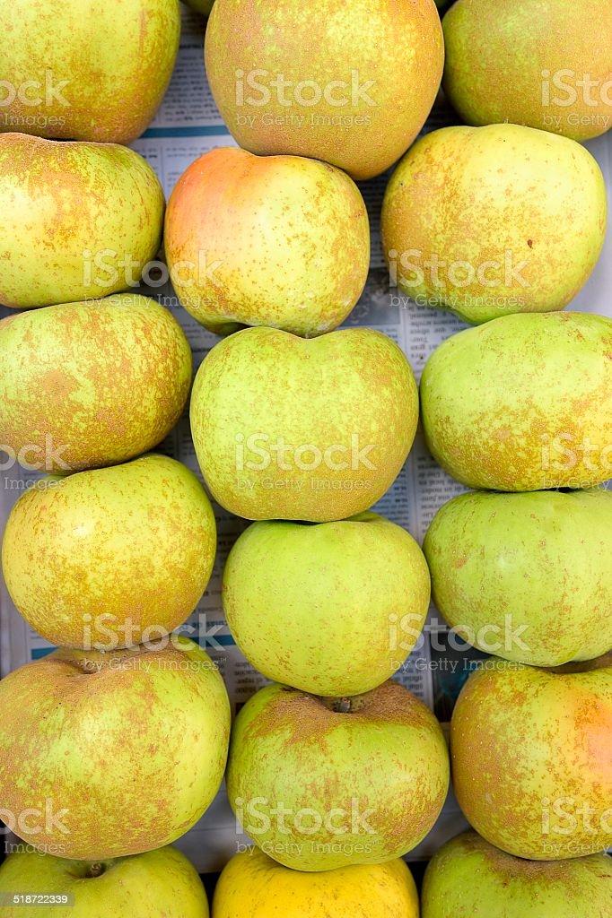 apple bramley stock photo