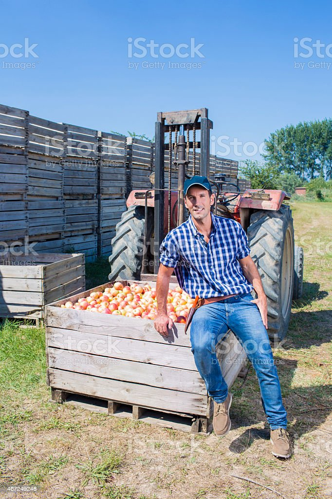 Apple business farmer stock photo