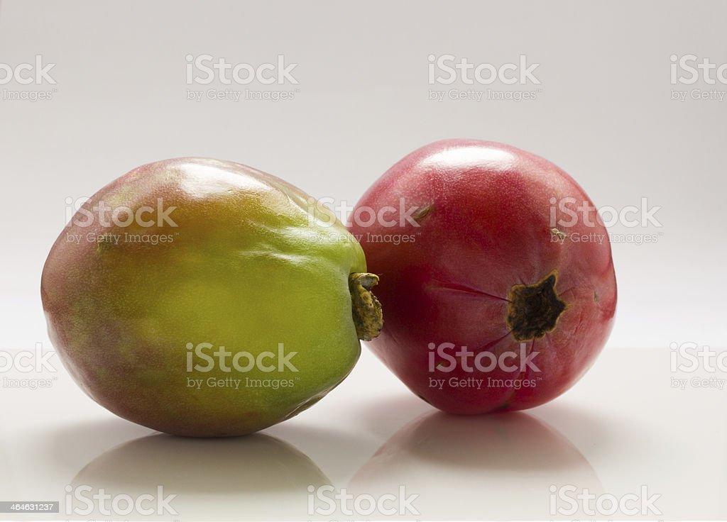 Apple cactus . royalty-free stock photo
