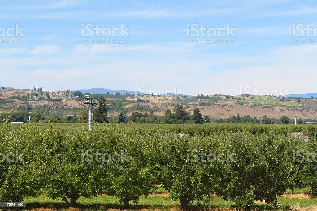 Apple country stock photo