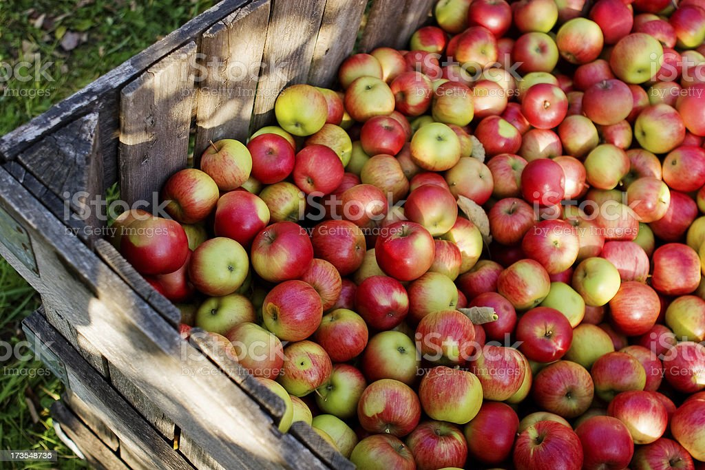 Apple Crate royalty-free stock photo