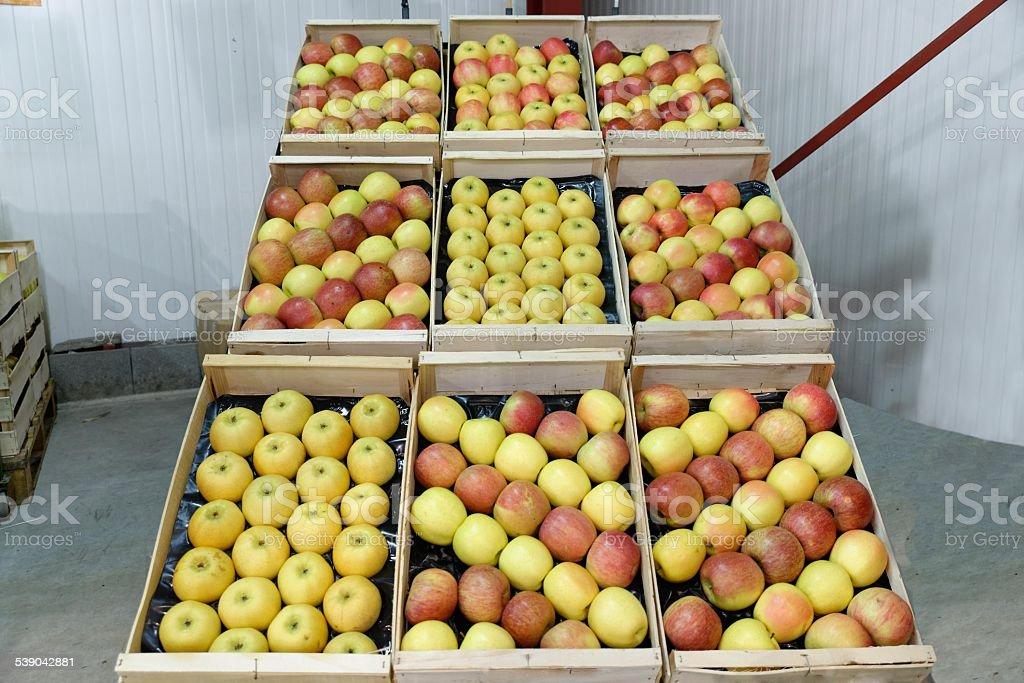 Apple crate stock photo