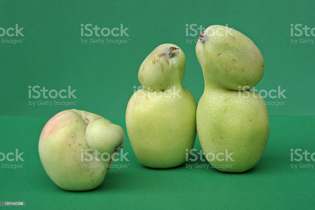 Apple family stock photo