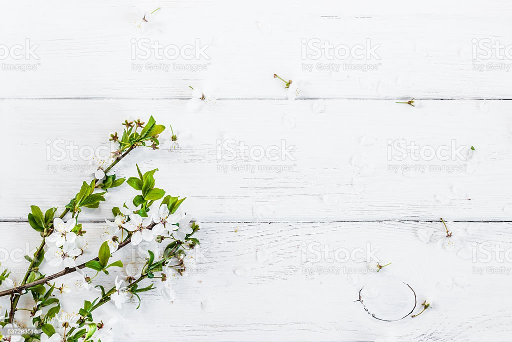 apple flowers on white wooden background stock photo
