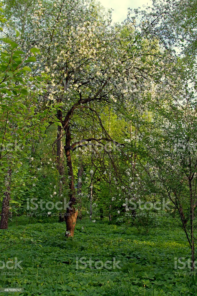 Apple garden stock photo