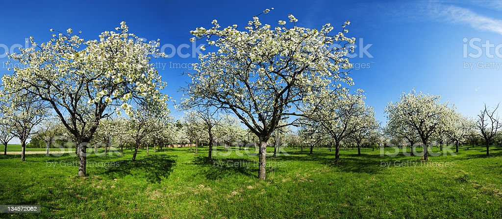 Apple groove royalty-free stock photo