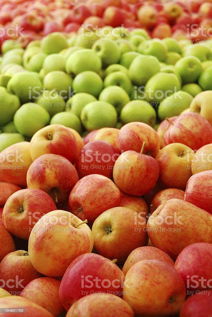 Apple Harvest royalty-free stock photo