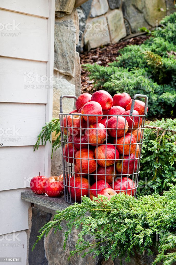 Apple In A Basket royalty-free stock photo