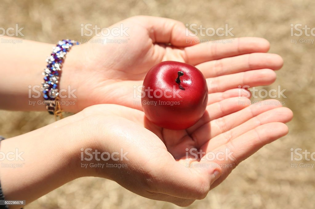apple in palm stock photo