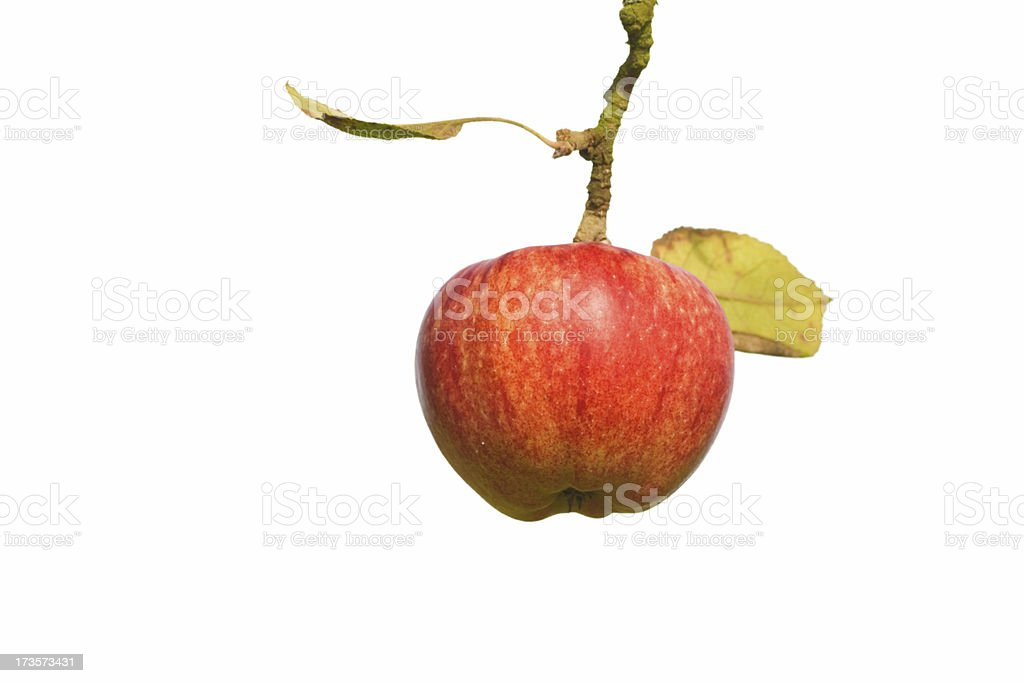Apple in the Handle royalty-free stock photo