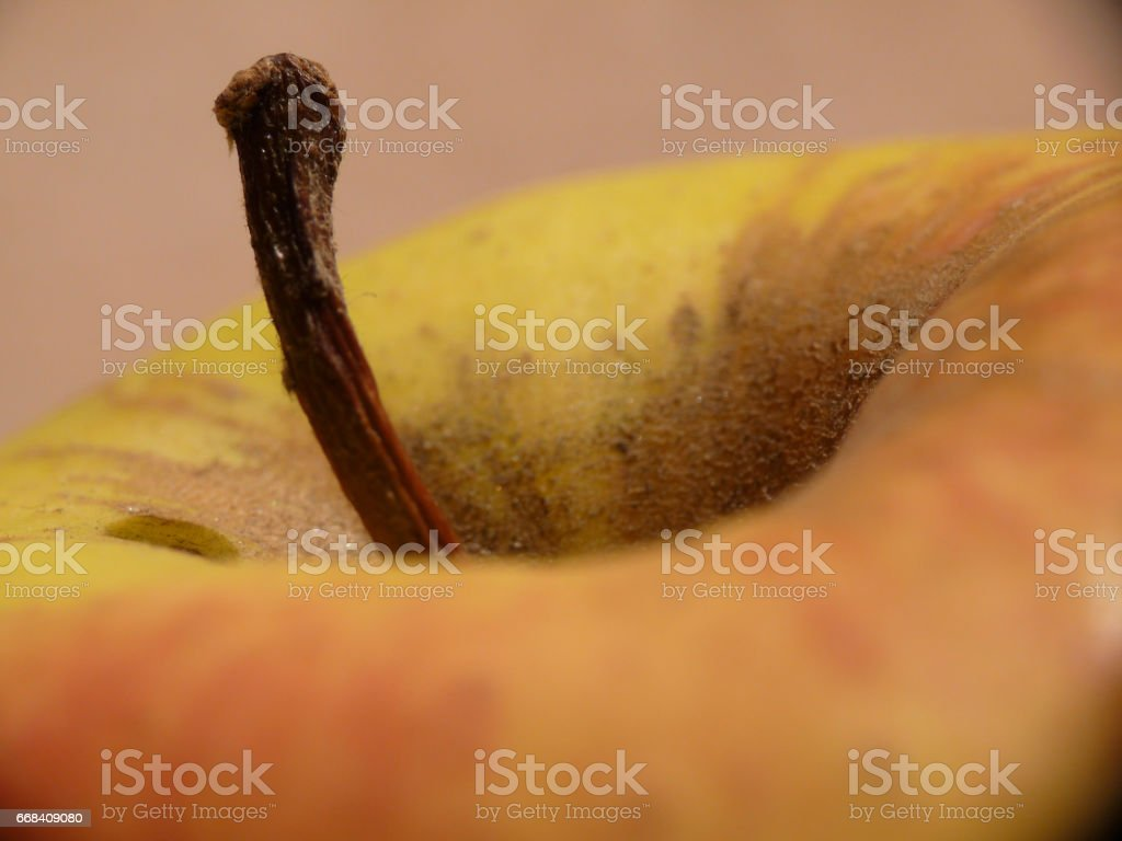 Apple macro stock photo