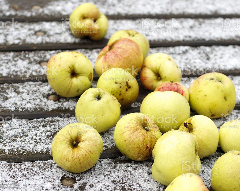 Apple on snow. royalty-free stock photo