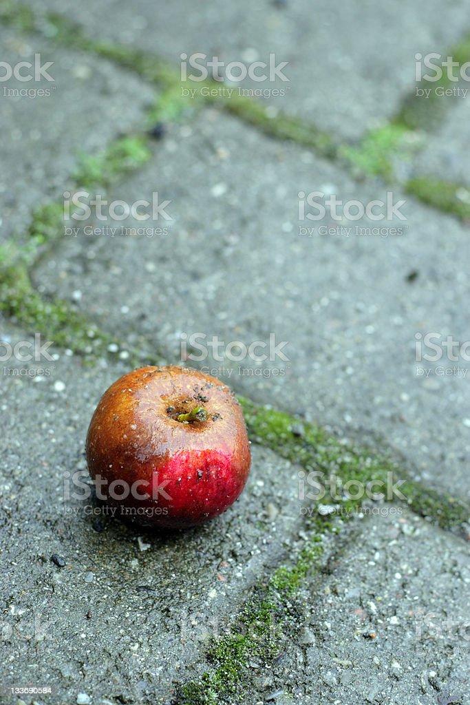 Apple on the ground. stock photo