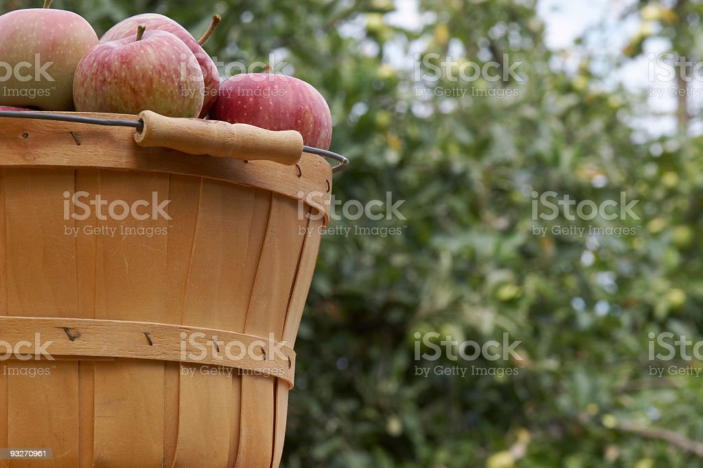Apple Orchard #2 royalty-free stock photo