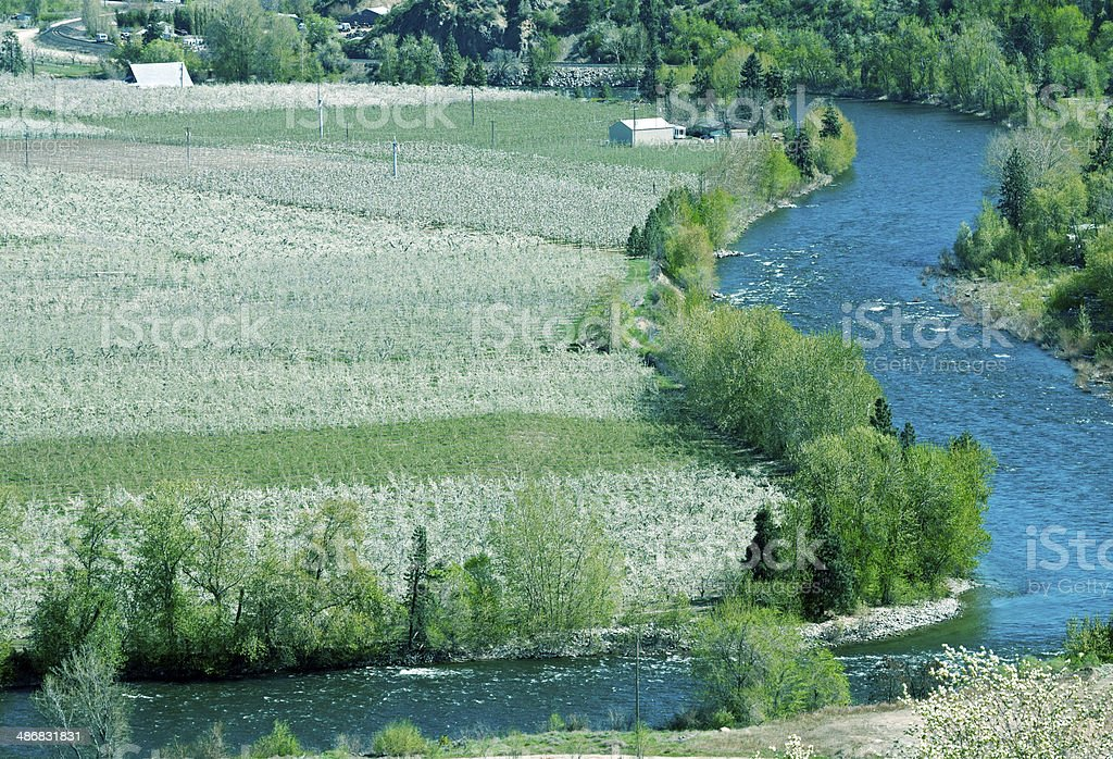 Apple orchards and river in central Washington state royalty-free stock photo