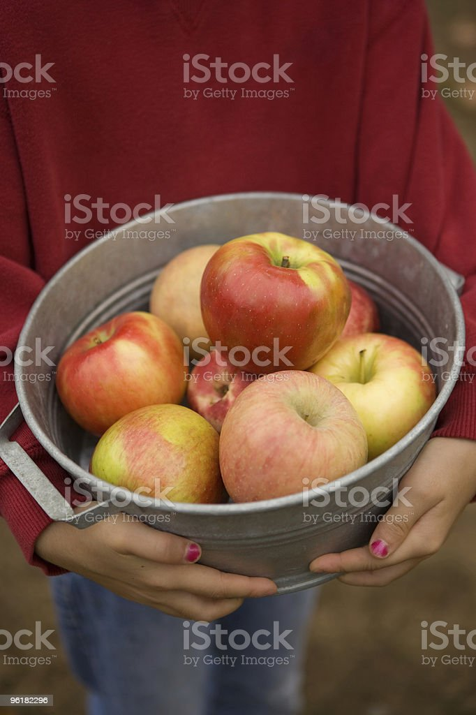 Apple Picking royalty-free stock photo