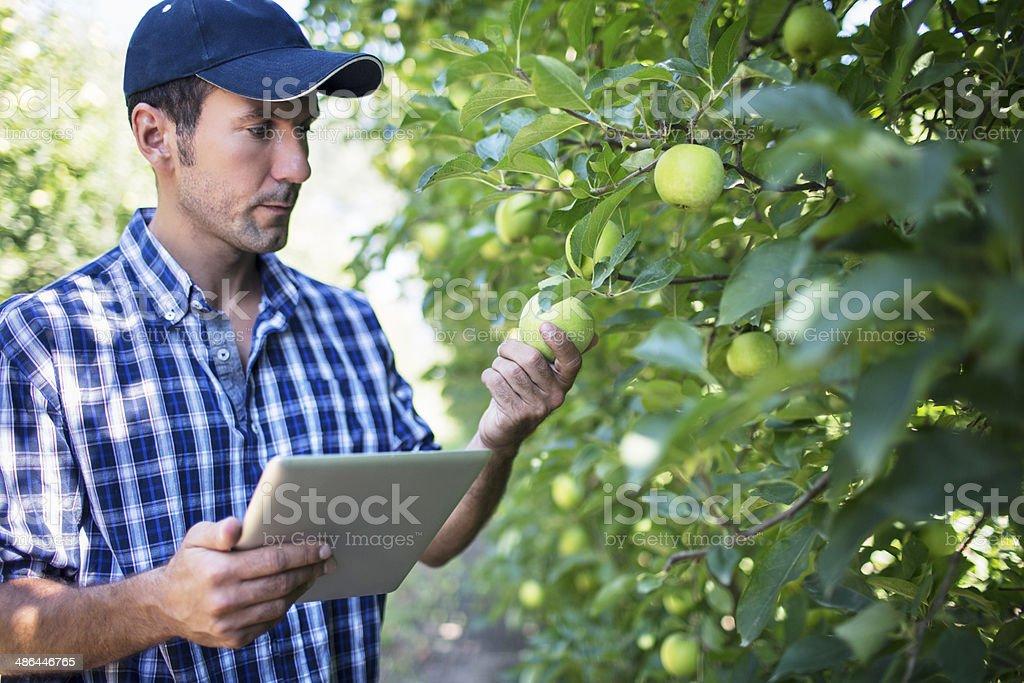 Apple quality control stock photo