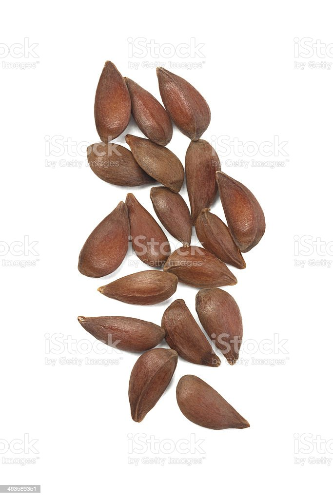 Apple Seeds stock photo