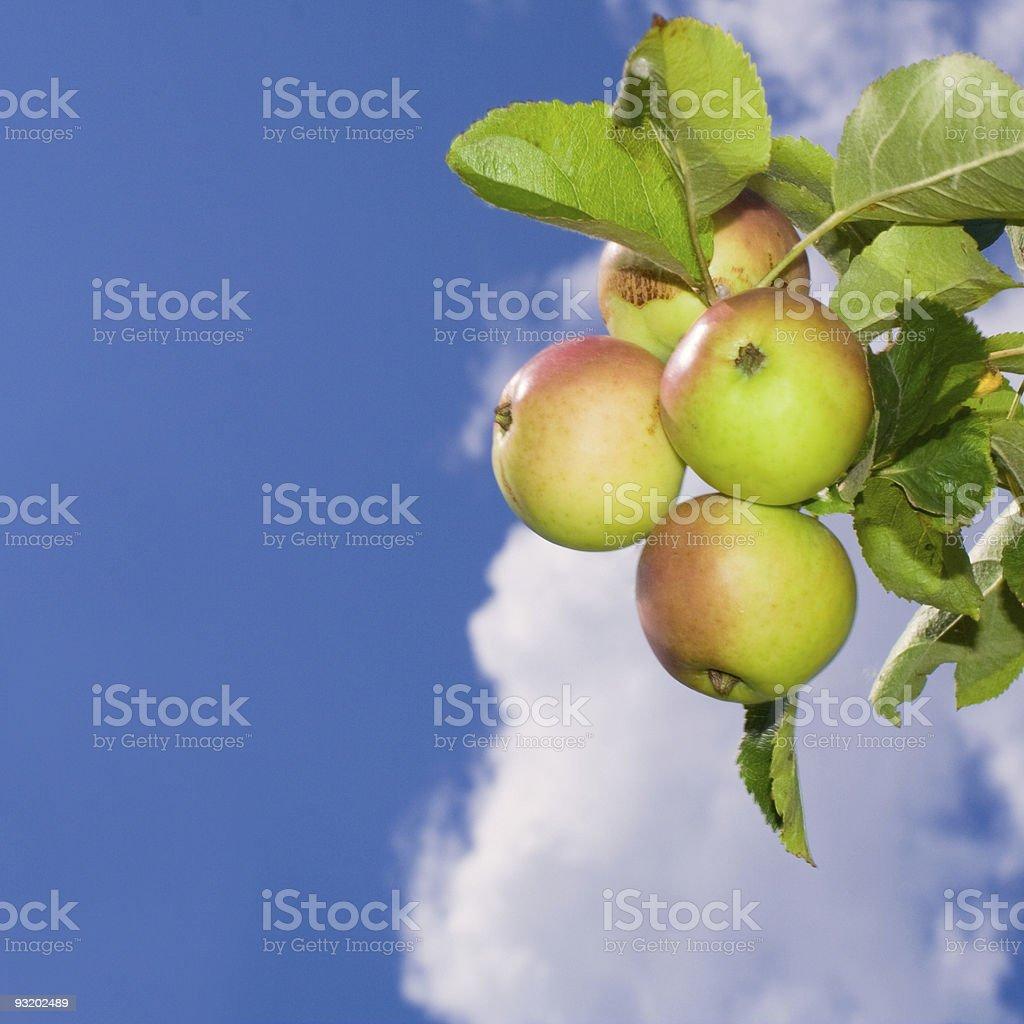 apple sky stock photo