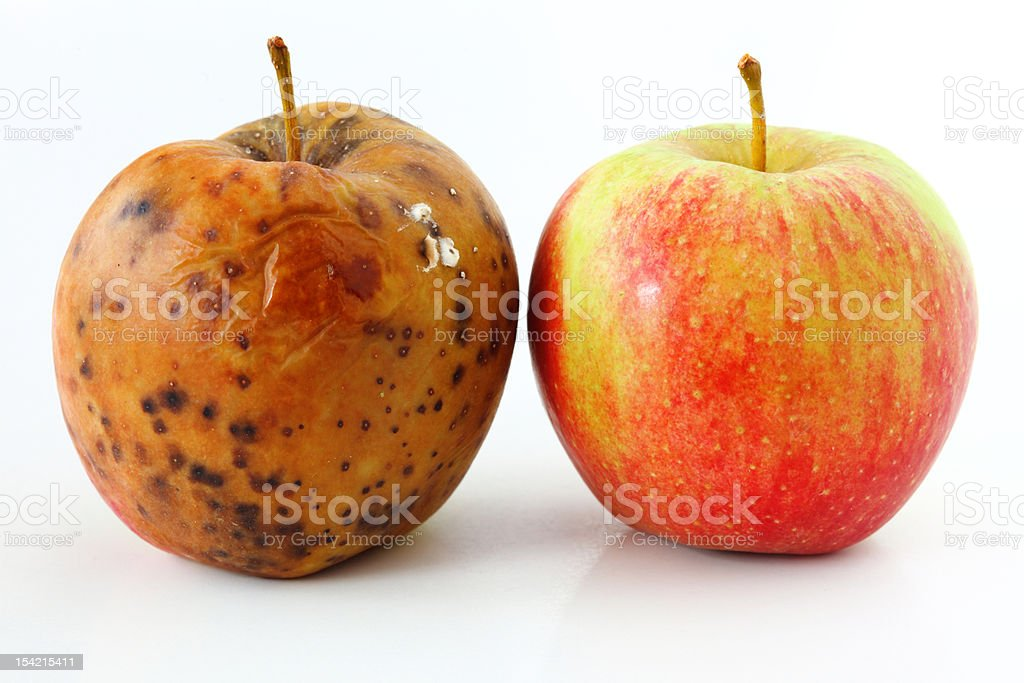 apple spoiled on white background Healthy and rotten apples stock photo