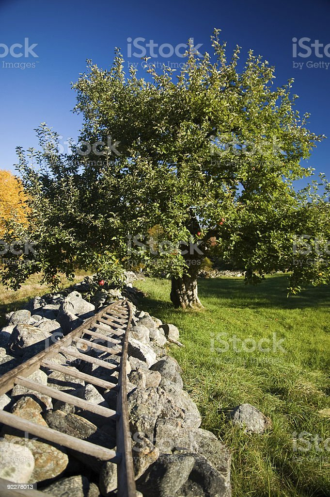 Apple Tree and Stone Wall stock photo