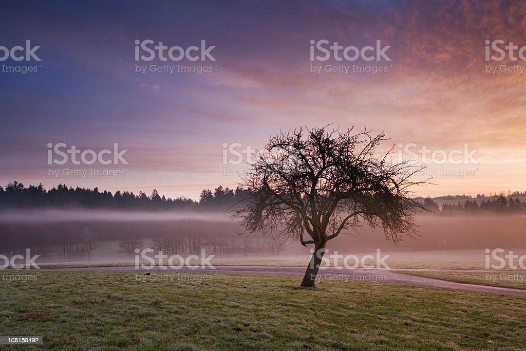 Apple Tree at Sunrise Near Water royalty-free stock photo