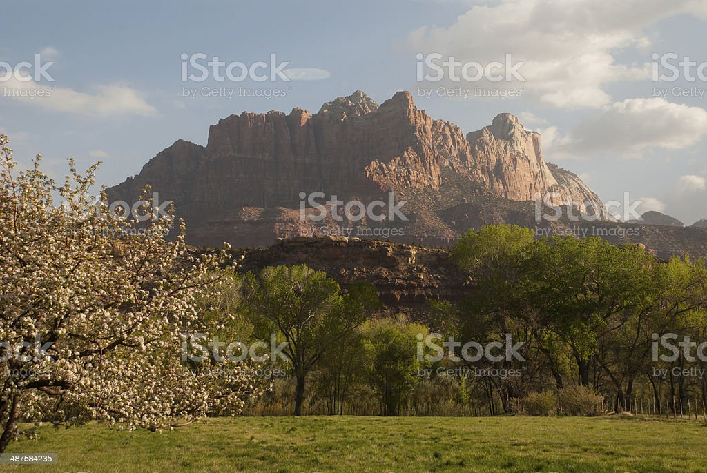 Apple Tree in Bloom and Spring Showers near Rockville Utah royalty-free stock photo